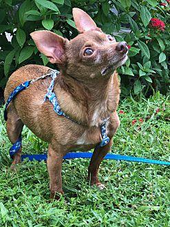 Adopt A Pet :: Tiny Tiny Love Bugs  - Ft Myers Beach, FL