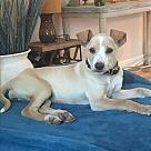 Adopt A Pet :: Tink