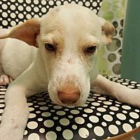 Adopt A Pet :: Shy boy - Tampa, FL