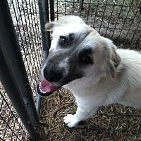 Adopt A Pet :: Charlotte - Fair Oaks Ranch, TX