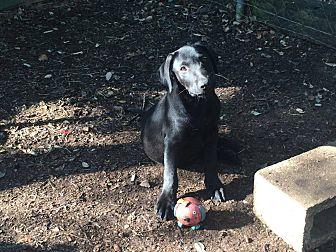 Adopt A Pet :: Dakota  - Fischer, TX