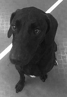 Adopt A Pet :: Black Beauty!!  - Ft Myers Beach, FL
