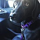 Adopt A Pet :: Poppy