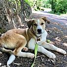 Adopt A Pet :: Sawyer RBF