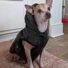 Adopt A Pet :: Quincy
