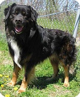 Arlington Heights Dog Adoption