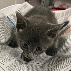 Available pets at Jacksonville Humane Society in