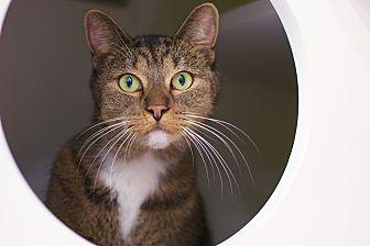 Adopt A Pet :: Charlie Girl  - Troy, MI