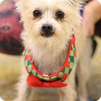 Adopt A Pet :: Pistol - Sacramento, CA