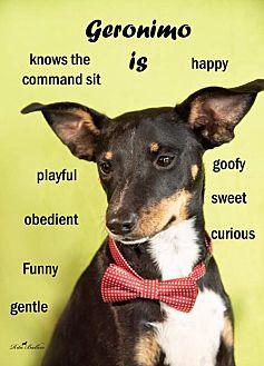 Adopt A Pet :: Geronimo  - Aurora, CO