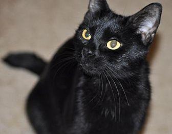Adopt A Pet :: Luna  - Liberty, NC