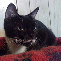 Adopt A Pet :: Meadow - Morganton, NC