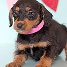 Adopt A Pet :: Blacsy