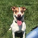 Adopt A Pet :: Joy