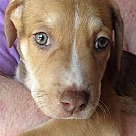 Adopt A Pet :: Morty
