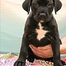 Adopt A Pet :: Avery
