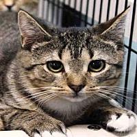 Adopt A Pet :: KATIE - Hampton Bays, NY
