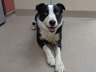 Adopt A Pet :: 18-0293  - Laramie, WY