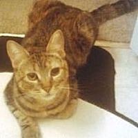 Adopt A Pet :: Victoria - Miami, FL