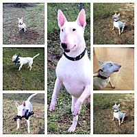 Adopt A Pet :: Maggie - Columbia, SC