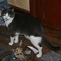 Adopt A Pet :: Aramis (COURTESY POST) - Baltimore, MD