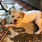Adopt A Pet :: Popeye