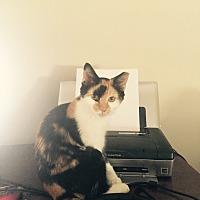Adopt A Pet :: Tabitha - Spartanburg, SC