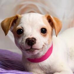 Craigslist Yakima Washington Pets - LISTCRAG