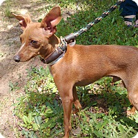 Adopt A Pet :: Benny - Lebanon, CT
