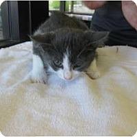 Adopt A Pet :: Sami - Riverside, CA