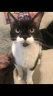 Adopt A Pet :: Milkstache  - Dallas, TX