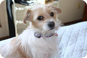 Yorba Linda Ca Terrier Unknown Type