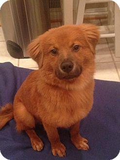Dog Adoption Bowie Md