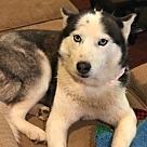 Adopt A Pet :: Nova