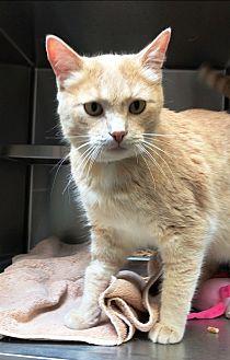 Adopt A Pet :: Joe  - Edmonton, AB