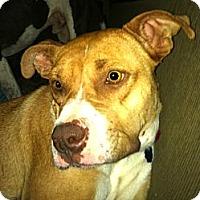 Adopt A Pet :: Campbell - Starkville, MS