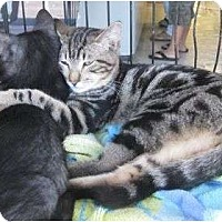 Adopt A Pet :: Jake - Riverside, CA