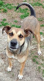 Adopt A Pet :: Trixie  - Snow Hill, NC