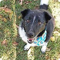 Adopted pets at Tails and Trails Rescue in Greenwood, Indiana