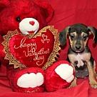 Adopt A Pet :: Mark Antony