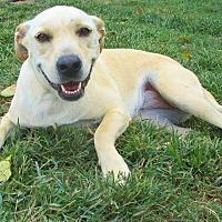 Adopt A Pet :: Lola - Melbourne, AR