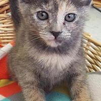 Adopt A Pet :: Twilight - Saint Robert, MO
