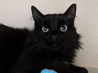 Adopt A Pet :: Berkley  - Laramie, WY