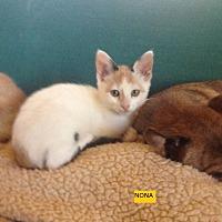 Adopt A Pet :: Nona - El Cajon, CA