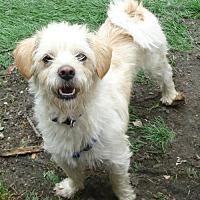 Adopt A Pet :: Jimmy - Tacoma, WA