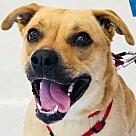 Adopt A Pet :: Della *Adoption Pending*
