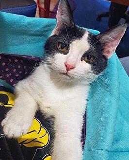 Adopt A Pet :: TIMMY TONKA  - Northwood, NH