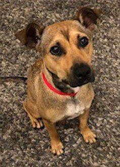 Adopt A Pet :: I LOVE LUCY....  - Ft Myers Beach, FL