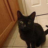 Adopt A Pet :: Ivy - Davis, CA