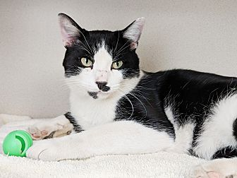 Adopt A Pet :: Maddox  - Laramie, WY